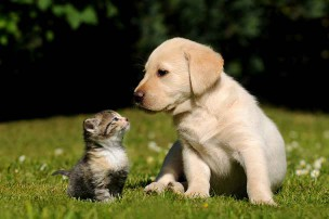ソフトバンク光よりもNURO光を使っているソフトバンクユーザーの犬と猫