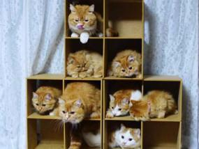 7階以下のアパート・マンションでも対応できるNURO光に猫達も嬉しい♪