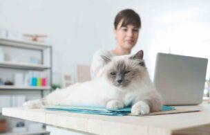 机の上に座っているネコ